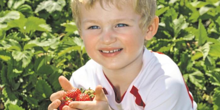 Lieblingsplatzerl: Das Erdbeerland weckt Kindheitserinnerungen