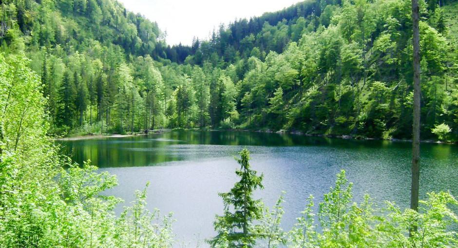 Lieblingsplatzerl: Über die Natur staunen am Eibensee