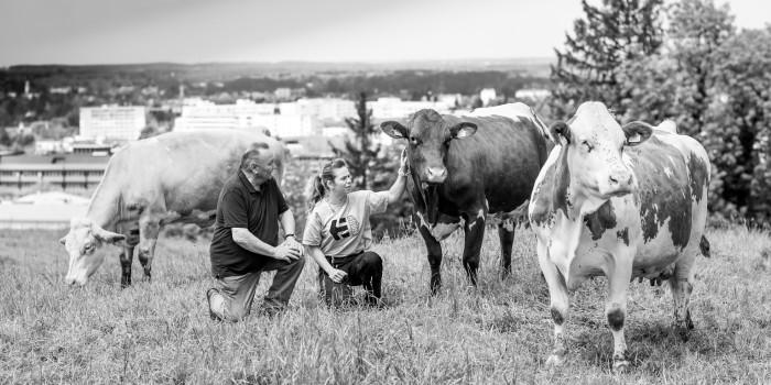 Muuusik: Die urbansten Kühe der Stadt
