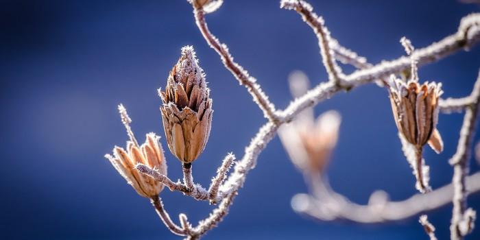 Es novembert weiter, dann kommt Schnee