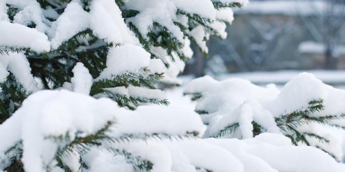 """Der Mythos von den """"weißen Weihnachten"""""""