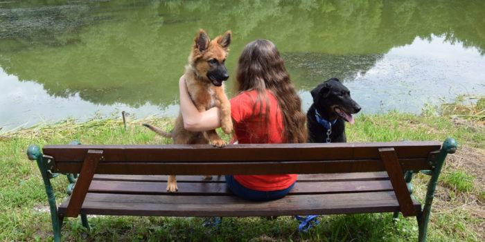 Salzburgerin bildet Hunde für psychisch erkrankte Menschen aus