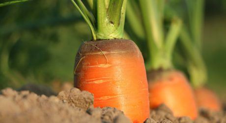 Warum uns die Karotte aufbaut