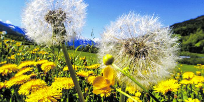 Stille über grünen Wiesen: Das große Insektensterben