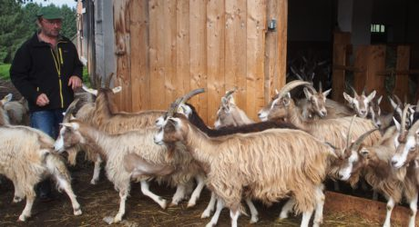 Delikatesse Ziegenkäse: Eine Fahrt zum Hof Eigelsberg