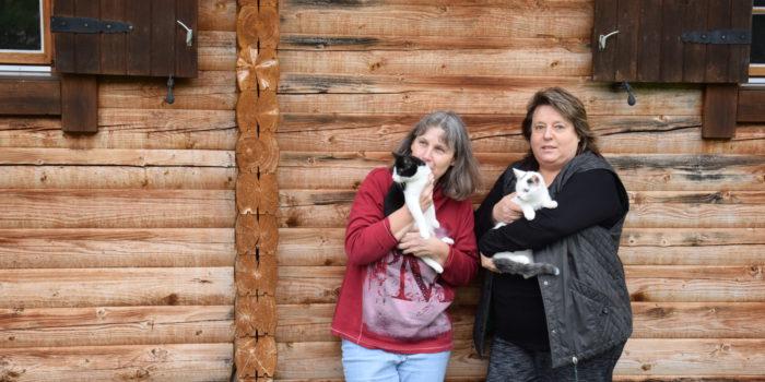 Neues Gesetz bringt private Tierschützer zu Fall: Katzenfreunde geben auf