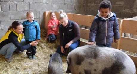 Tierschutzverein startet Projekt: Am Bauernhof können Kinder aus der Stadt Natur erleben.