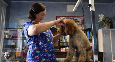 Zu Gast im Hundesalon: Waschen und föhnen, bitte!