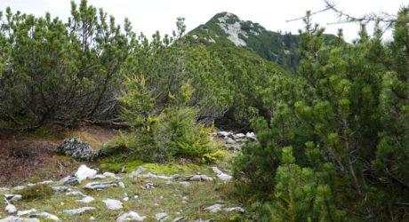 Am alten Jagdsteig auf Buttergupf und Brunnkogel