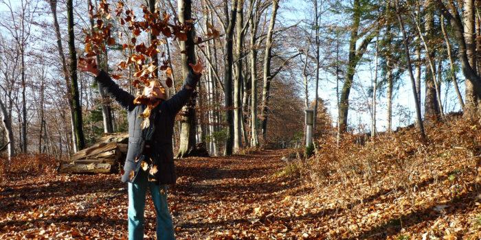 Ein gemütlicher schöner Waldweg mit Marterl