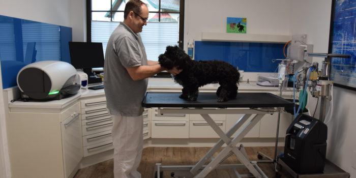 beruhigung für hunde silvester