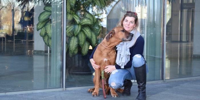 Hund und Mensch sprechen oft nicht dieselbe Sprache