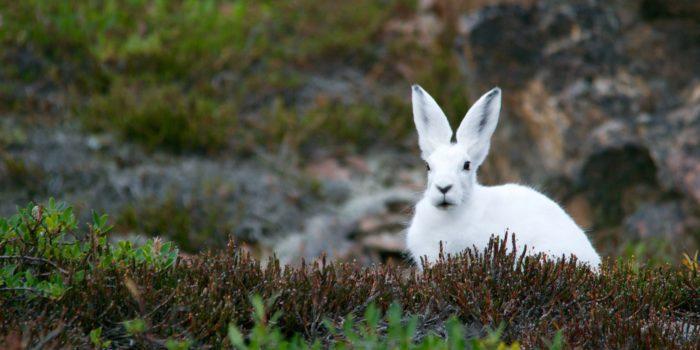 Milde Winter bringen Tierwelt durcheinander
