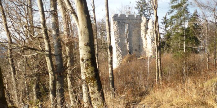 Abenteuer in der Natur: Ein Schatz im Wald