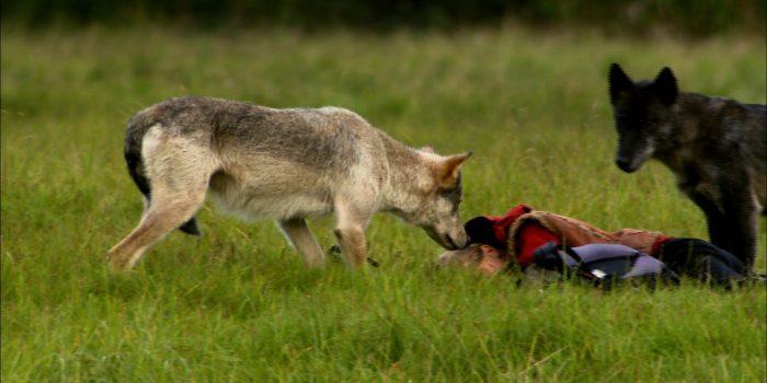 """""""Der Wolfist uns sehr ähnlich"""""""