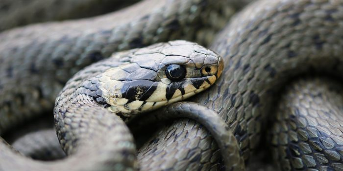 Schlange in Sicht? Schau ihr in die Augen …