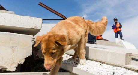 Hundeschnauzen retten Leben
