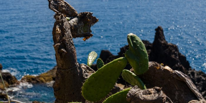 Zauberhafte Blumeninsel im Atlantik