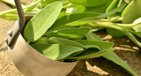 Tipp für den Herbst: Salbei-Zitronen-Getränk