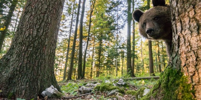 Wenn sich Mensch und Bär  nahe kommen